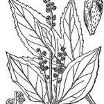 Medicament Pour Allergie Pollen